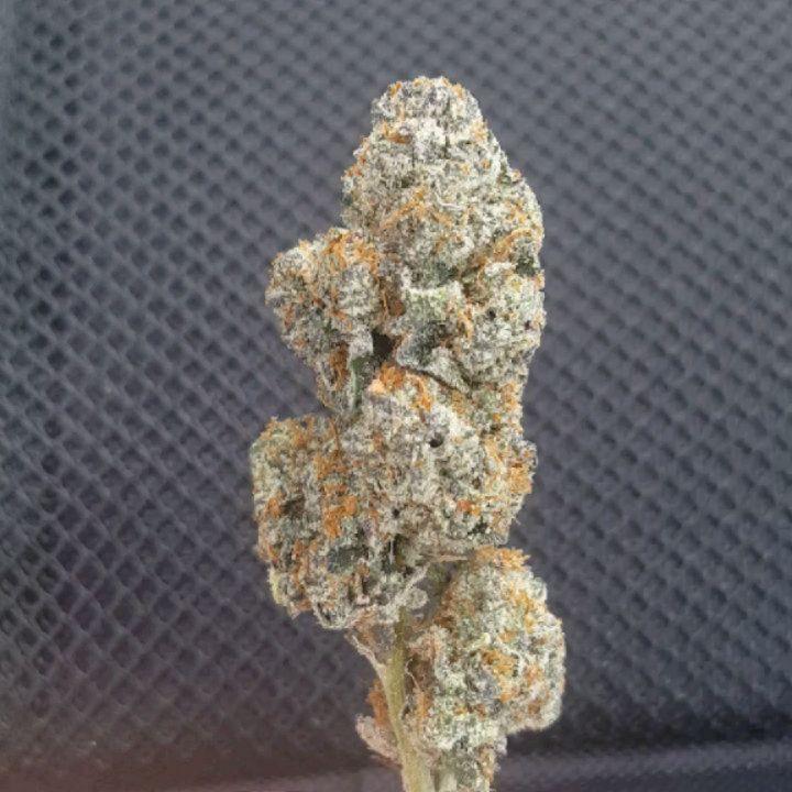 candy rain marijuana weed cannabis strain review