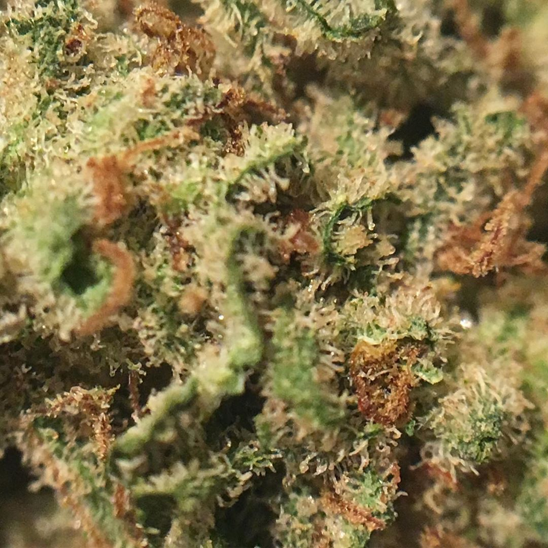 grape diamonds flower from curaleaf strain review by indicadam
