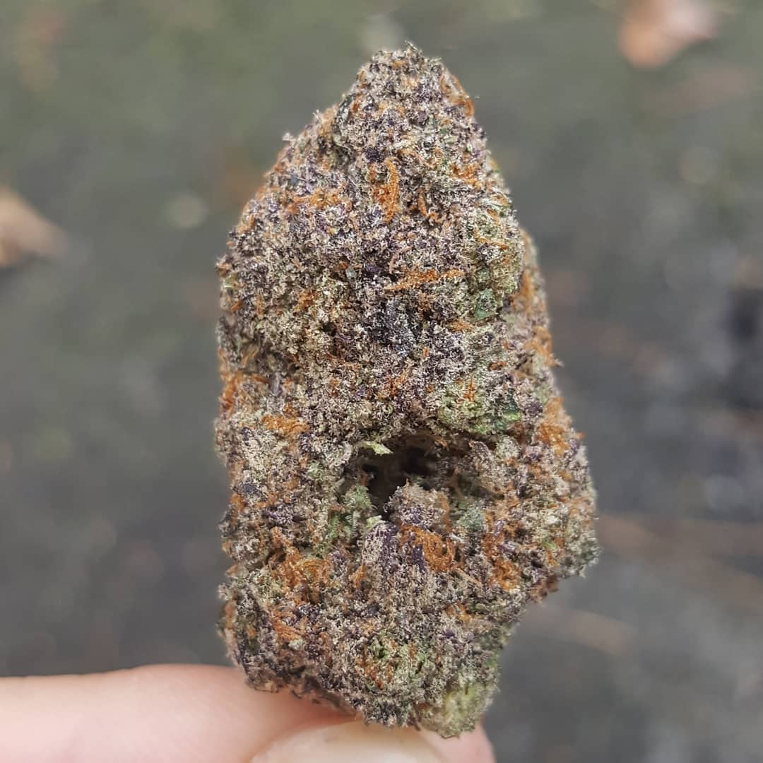 gushers weed flower strain review