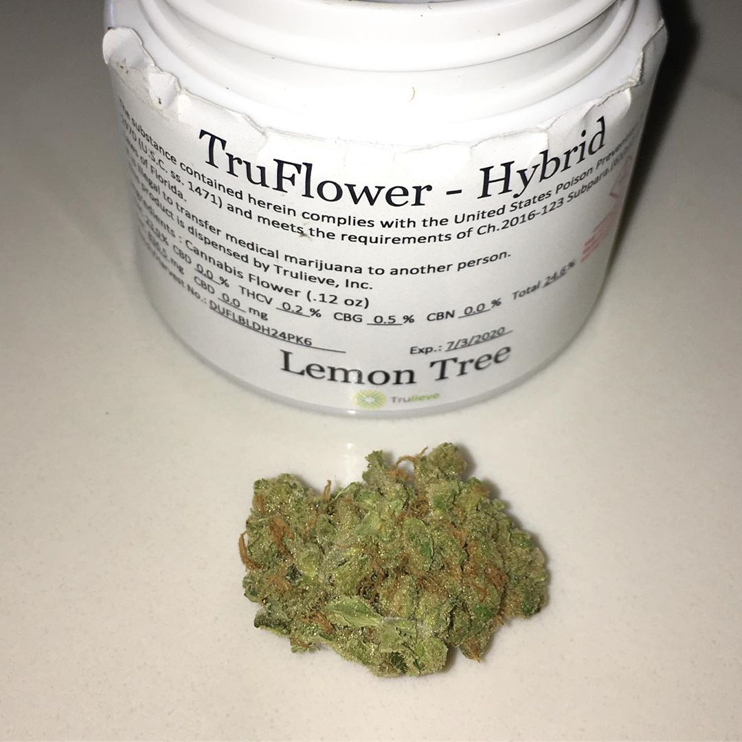 lemon tree truflower from trulieve hybrid strain review by indicadam