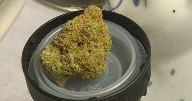 alien rock candy by meraki gardens strain review by pdxstoneman