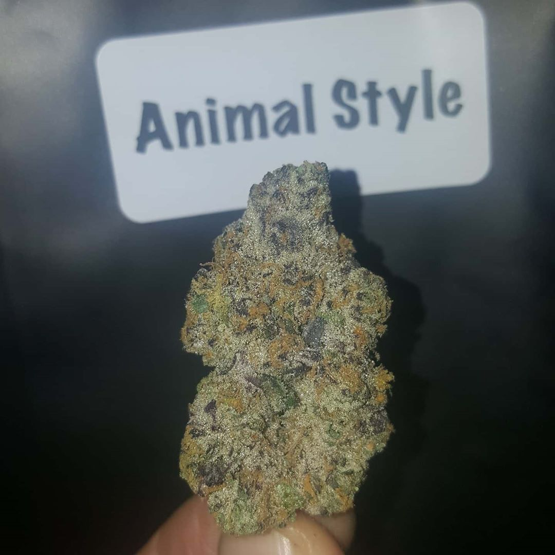 animal style by connected cannabis co strain review by dcent_treeviews 2