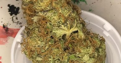best friend og by shelby county cultivation strain review by nightmare_ro