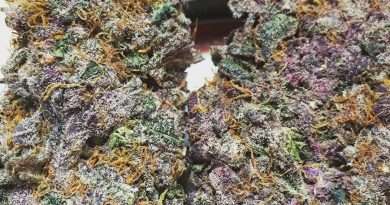 cannalope haze by dna genetics strain review by jean_roulin_420