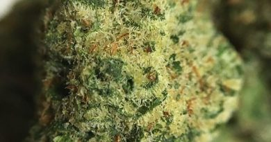 florida i-95 from MUV Florida strain review by indicadam