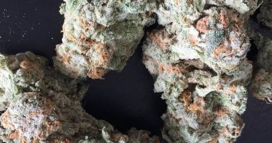 gg4 strain review by jean_roulin_420