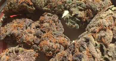 girl scout cookies strain review by jean_roulin_420 1