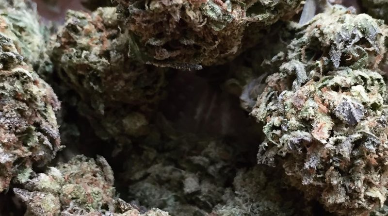 gsc strain review by jean_roulin_420