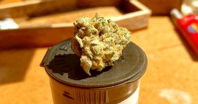 hot donna from tetra cannabis strain review by pdxstoneman