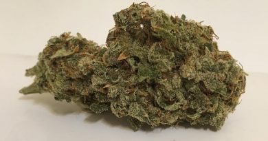 jack herer (northern lights #5 x shiva skunk x haze) strain review by thecoughingwalrus