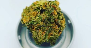 keep tahoe blue by maggie's farm colorado strain review by cannaquestions