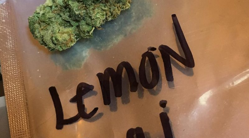 lemon thai from mary's secret strain review by thecoughingwalrus