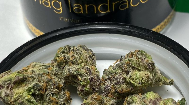 mag landrace verano brands strain review by nightmare_ro
