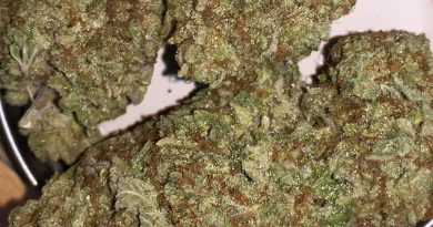 orgasmotron x mr nice strain review by jean_roulin_420