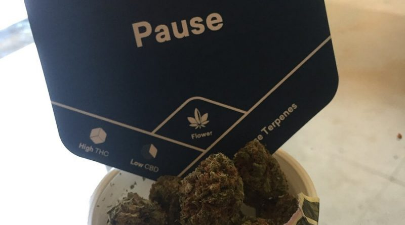 pause by tokyo smoke strain review by thecoughingwalrus