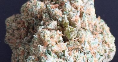 samoa cookies strain review by jean_roulin_420