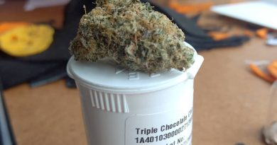 triple chocolate chip by high noon cultivation strain review by pdxstoneman