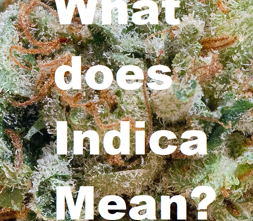 what does indica mean featured image pre 98 bubba kush
