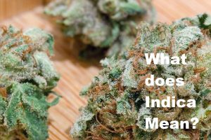 what does indica mean picture of pre 98 bubba kush