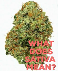 what does sativa mean by kushector