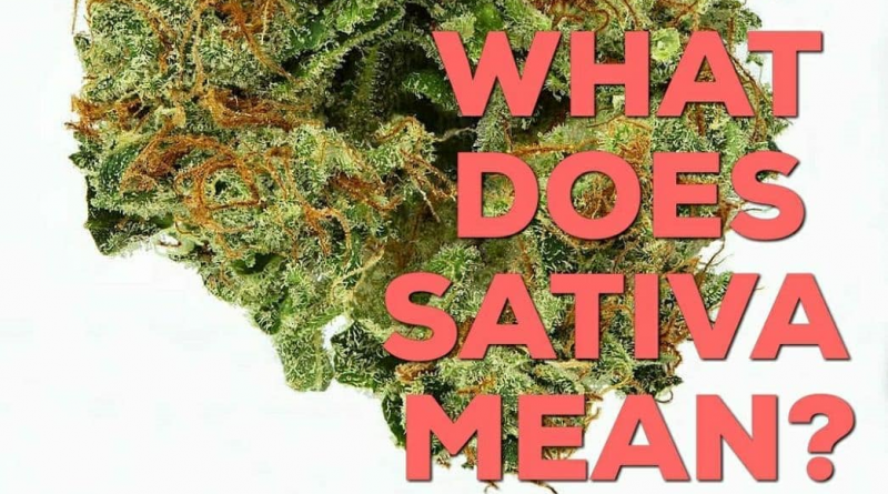 what does sativa mean featured image by kushector