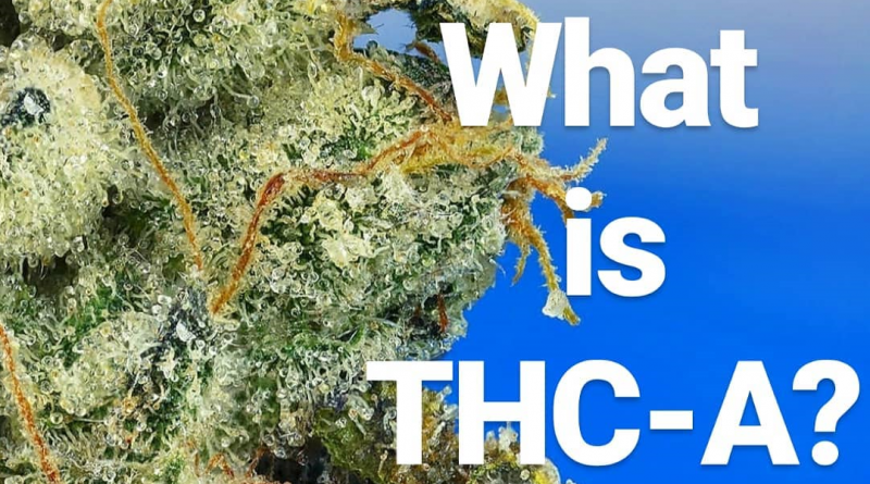 what is thca explainer by cannaquestions