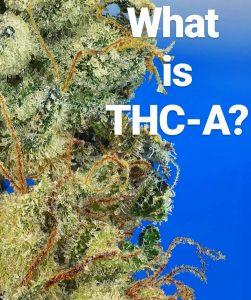 what is thca tetrahydrocannabinolic acid by cannaquestions