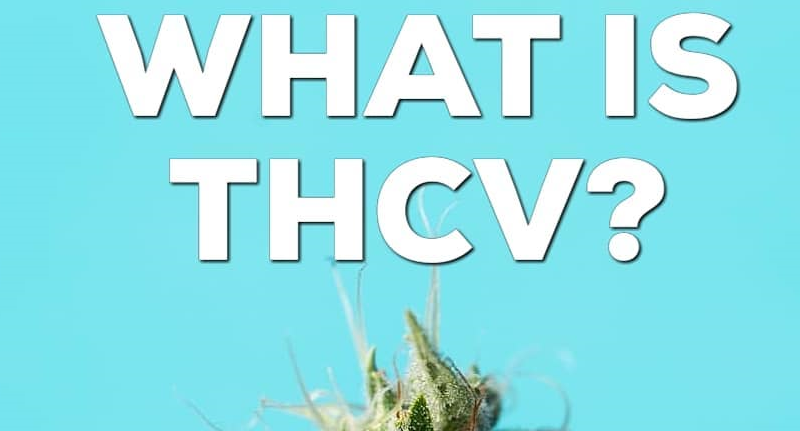 what is thcv featured image by seedandsmith