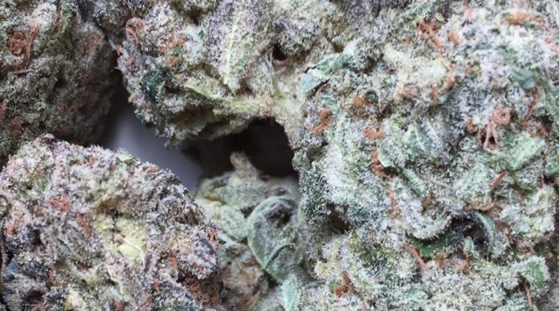 yoda og strain review by jean_roulin_420 1