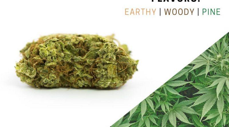 acdc cbd strain by firelands scientific strain review by ohio_marijuana
