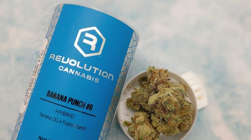 banana punch #6 by revolution cannabis strain review by upinsmokesession