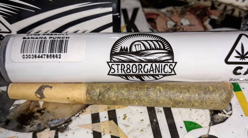 banana punch preroll by str8 organics strain review by sjweedreviewbanana punch preroll by str8 organics strain review by sjweedreview