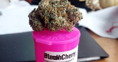black cherry punch by high noon cultivation strain review by pdxstoneman