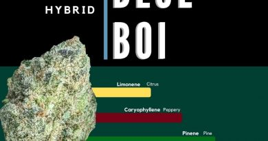 blue boi by ascension strain review by ohio_marijuana 2