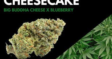 blueberry cheesecake by woodward fine cannabis strain review by ohio_marijuana