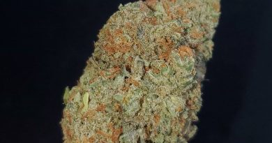 cherry pie by flavour chasers strain review by _scarletts_strains_