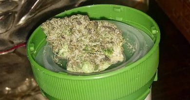 dirty taxi by archive seed bank strain review by pdxstoneman 2