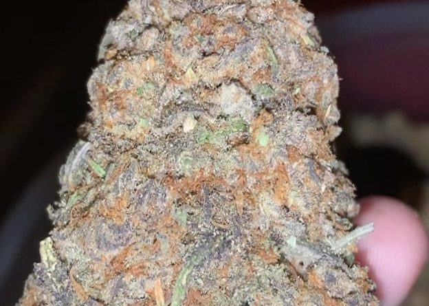 do-si-dos by archive seed bank strain review by thatcutecannacouple