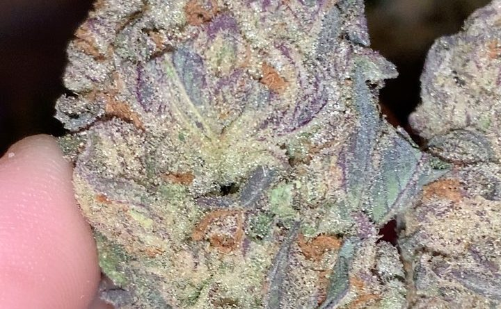 gdp strain review by thatcutecannacouple