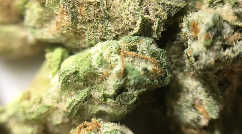 goji margy by muv florida strain review by indicadam