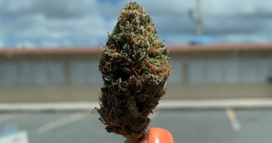 golden nugget strain by PRICH biotech strain review by trippietropical