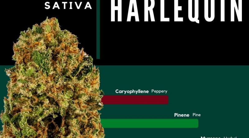 harlequin by cresco labs strain review by ohio_marijuana