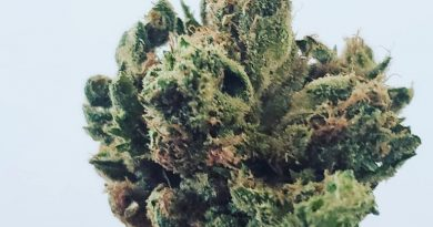 jilly bean strain by subcool's the dank strain review by green.is.for.hope