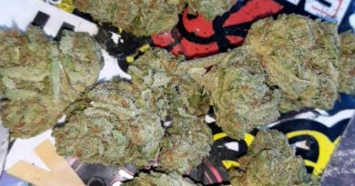 key lime pie by monterey kush co. strain review by sjweedreview
