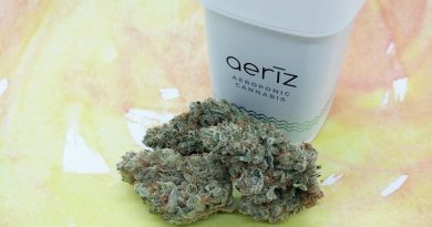 lemon tree by aeriz strain review by upinsmokesession