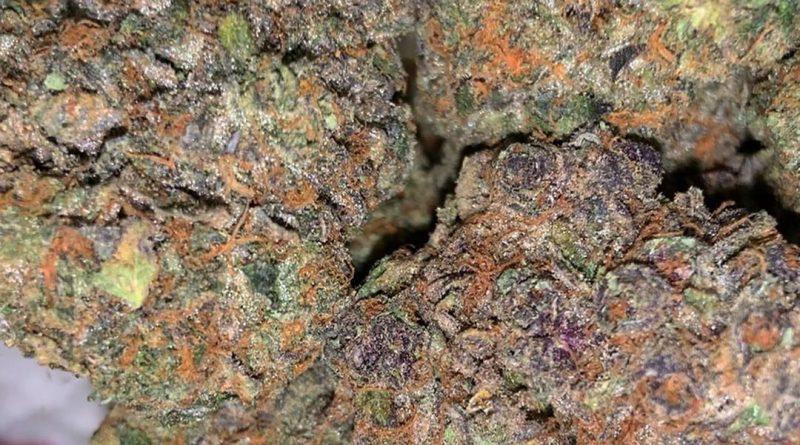 mochi kush strain review by thatcutecannacouple