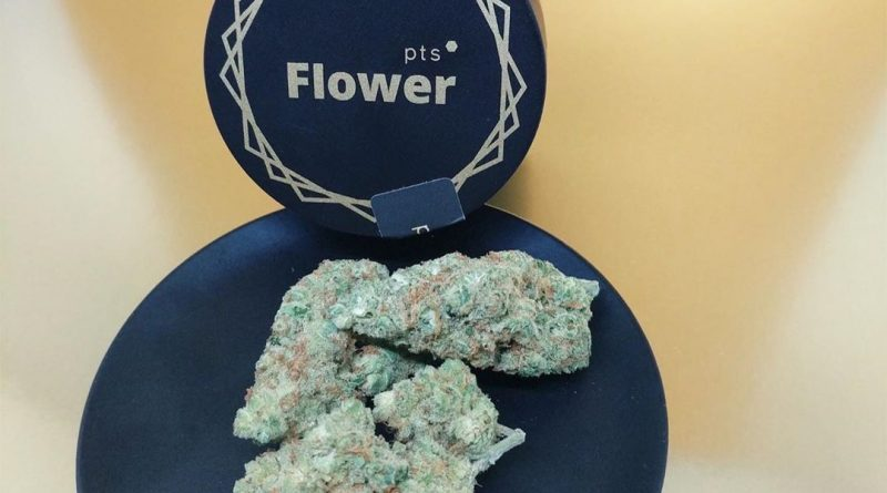 outlaw by pts flower strain review by upinsmokesession