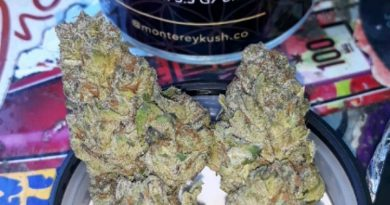 peanut butter cookies by monterey kush co strain review by sjweedreview