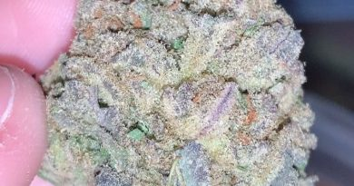 permafrost by rogue buds strain review by thatcutecannacouplepermafrost by rogue buds strain review by thatcutecannacouple