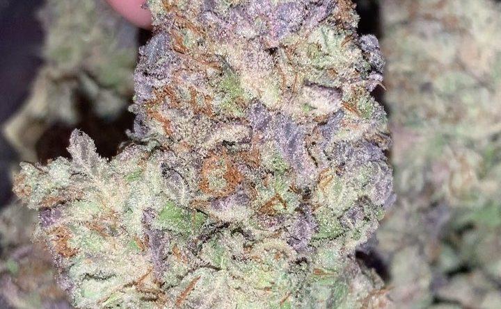 purple afghani by bc bud depot strain review by thatcutecannacouple